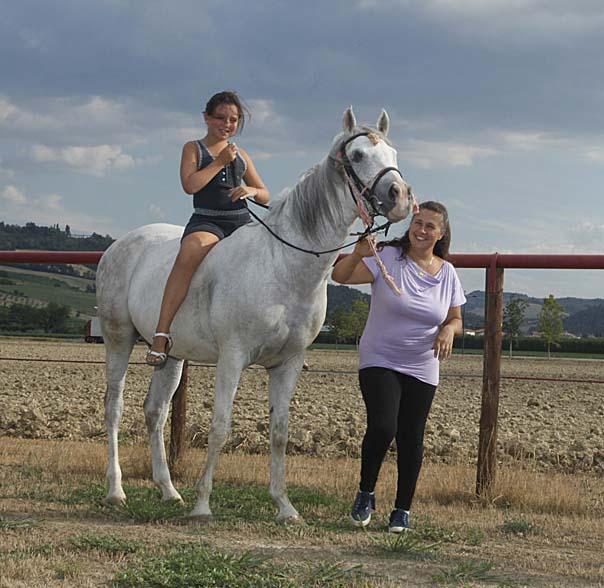 cavallo king