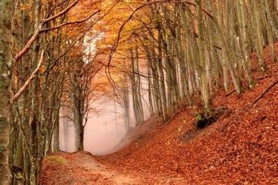 bosco autunno nel parco