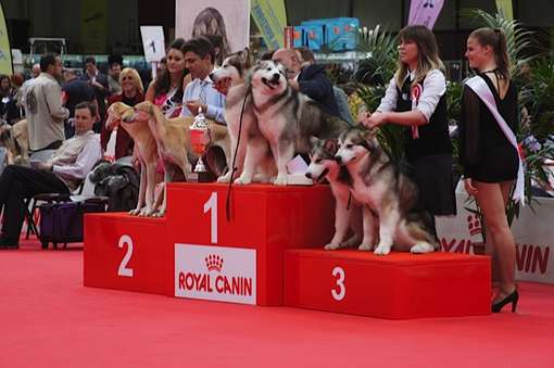 esposizione mostra cani