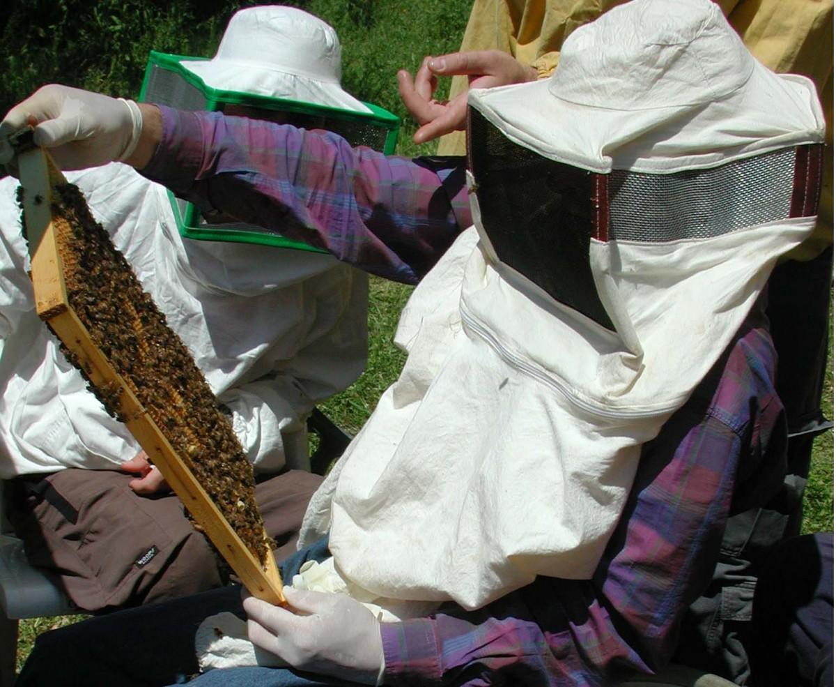 apicoltori miele api