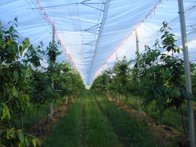 teli copertura agricoltura
