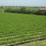 agricoltura campo