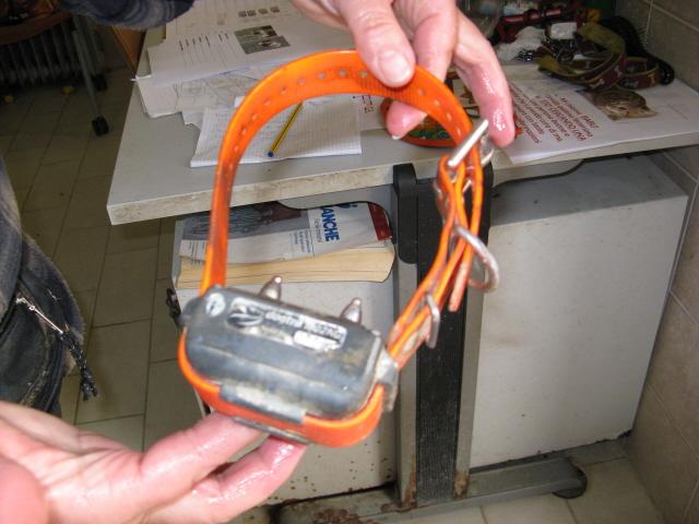 collare elettrico