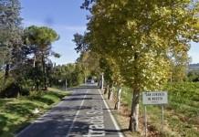Alberi San Lorenzo in Noceto
